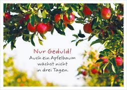 Nur Geduld! Auch ein Apfelbaum wächst nicht in drei Tagen