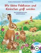 Kleine Feldhasen und Kaninchen werden groß