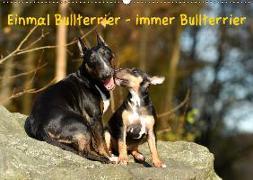 Einmal Bullterrier - immer Bullterrier (Wandkalender 2019 DIN A2 quer)