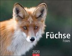 Füchse Kalender 2020