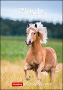 Pferde Kalender 2020