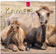 Kamele 2020