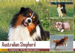 Australian Shepherd - Hütehunde mit Familienanschluss (Wandkalender 2020 DIN A3 quer)