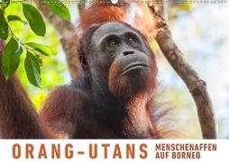 Orang-Utans Menschenaffen auf Borneo (Wandkalender 2020 DIN A2 quer)