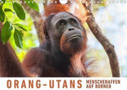 Orang-Utans Menschenaffen auf Borneo (Wandkalender 2020 DIN A4 quer)