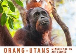 Orang-Utans Menschenaffen auf Borneo (Wandkalender 2020 DIN A3 quer)