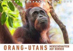 Orang-Utans Menschenaffen auf Borneo (Tischkalender 2020 DIN A5 quer)