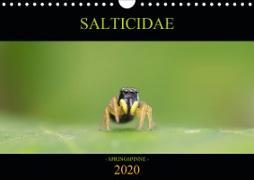 SALTICIDAE Kalender 2020 (Wandkalender 2020 DIN A4 quer)