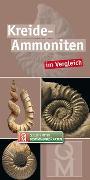 Kreide-Ammoniten
