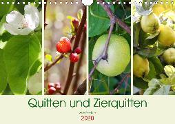 Quitten und Zierquitten (Wandkalender 2020 DIN A4 quer)