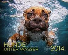 Hunde unter Wasser 2014