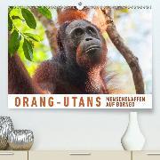 Orang-Utans Menschenaffen auf Borneo(Premium, hochwertiger DIN A2 Wandkalender 2020, Kunstdruck in Hochglanz)