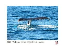 Wale und Orcas - Giganten der Meere 2020 - White Edition - Timokrates Kalender, Wandkalender, Bildkalender - DIN A3 (42 x 30 cm)