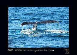 Whales and orcas - giants of the ocean 2020 - Black Edition - Timocrates wall calendar with UK holidays / picture calendar / photo calendar - DIN A3 (42 x 30 cm)