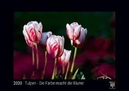 Tulpen - Die Farbe macht die Blume 2020 - Black Edition - Timokrates Kalender, Wandkalender, Bildkalender - DIN A4 (ca. 30 x 21 cm)