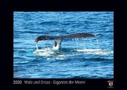 Wale und Orcas - Giganten der Meere 2020 - Black Edition - Timokrates Kalender, Wandkalender, Bildkalender - DIN A4 (ca. 30 x 21 cm)