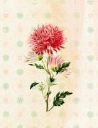 Die Gärten der Künstler Großes Notizheft (A5) Motiv Dahlie