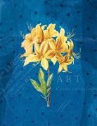 Die Gärten der Künstler Großes Notizheft (A5) Motiv Gelbe Orchidee