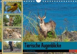 Tierische Augenblicke in Südafrika (Wandkalender 2020 DIN A4 quer)