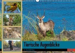 Tierische Augenblicke in Südafrika (Wandkalender 2020 DIN A3 quer)