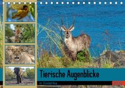 Tierische Augenblicke in Südafrika (Tischkalender 2020 DIN A5 quer)