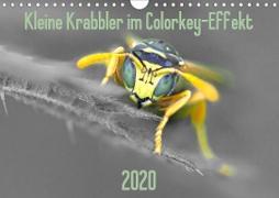 Kleine Krabbler im Colorkey-Effekt (Wandkalender 2020 DIN A4 quer)