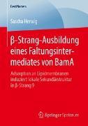 ß-Strang-Ausbildung eines Faltungsintermediates von BamA