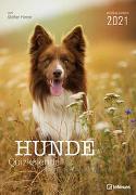 Stefan Heine Hunde Quizkalender 2021 Wochenkalender - Quizkalender - Rätselkalender - Jede-Woche-neue-Rätsel - Tierkalender - 23,7x34