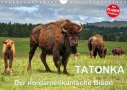 TATONKA Der nordamerikanische Bison (Wandkalender 2021 DIN A4 quer)