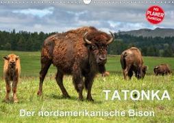 TATONKA Der nordamerikanische Bison (Wandkalender 2021 DIN A3 quer)