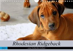 Rhodesian Ridgeback - eine Liebe fürs Leben (Wandkalender 2021 DIN A4 quer)