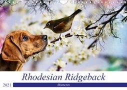 Rhodesian Ridgeback - Moments (Wandkalender 2021 DIN A4 quer)