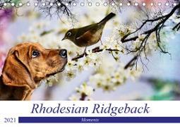 Rhodesian Ridgeback - Moments (Tischkalender 2021 DIN A5 quer)