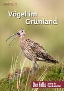 Vögel im Grünland