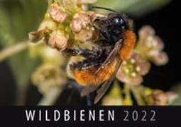 Wildbienen 2022