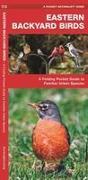 Eastern Backyard Birds: An Introduction to Familiar Urban Species